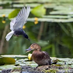 Ga van mijn nest af!!!!