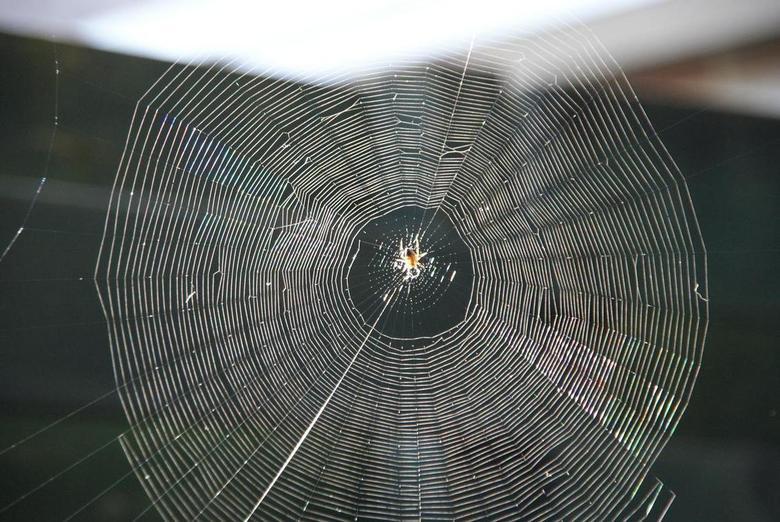 Spider Web - Ik was bij de buren met mijn camera. Herman zegt, kijk eens Jeroen hoe mooi de zon in die web schijnt. Deze heb ik toen op de foto gezet.