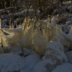 Lichtval door bevroren riet