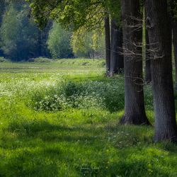 Green is the colour of spring