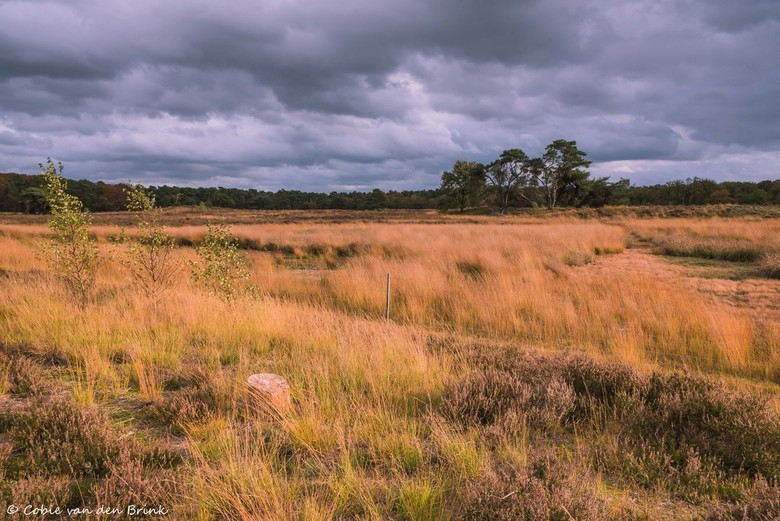 Natuurgebied de Nieuwe Heide 1 - Foto gemaakt tijdens mooie herfstwandeling in natuurgebied de Nieuwe Heide tussen Best en Son.<br /> De dreigende lu