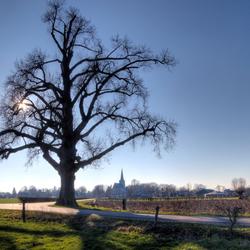 Eiken boom Voorst