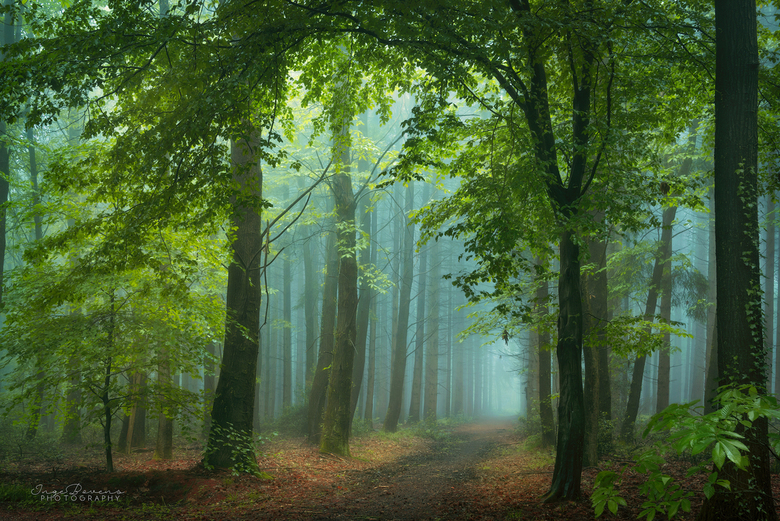 Breathing Forest. -
