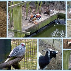 De dieren in de dierenweide in Pittelo.