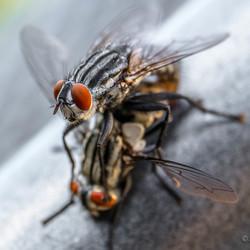 vliegen (1 van 1)-2