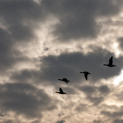 Vogelvlucht...