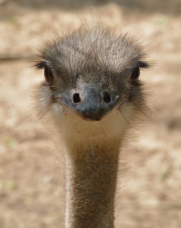 Emoe -