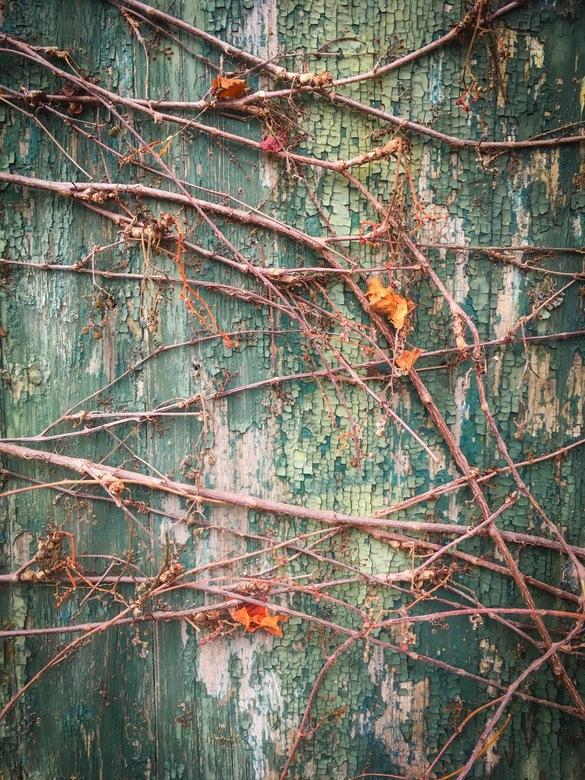 Vergaan - Oude deur die al een tijdje geen likje verf meer heeft gezien. De natuur eist haar plek weer terug.