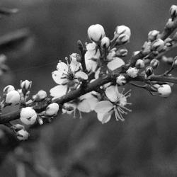 extra vroeg voorjaar in onze tuin