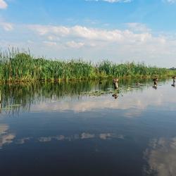 Ducks - Giethoorn