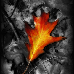Fall...en leafe...