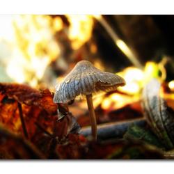 Mushroom3!!