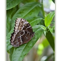 Vlinders 2