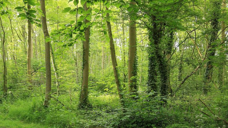 The Woods - Heilooërbos
