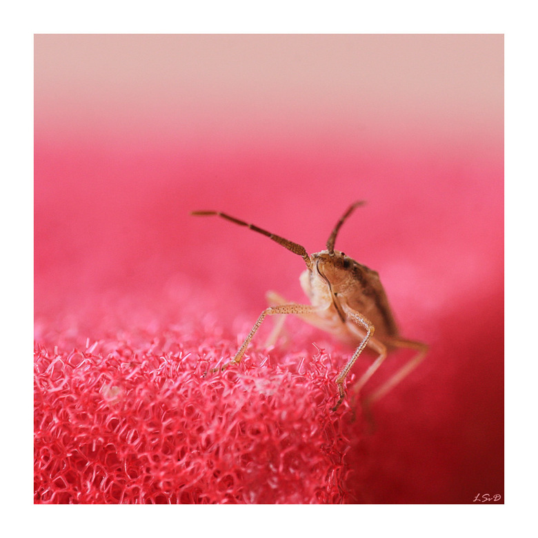 Wants - Een klein beestje zat op het schuursponsje. Met de 180mm 3.5f macro met ambient light geschoten.