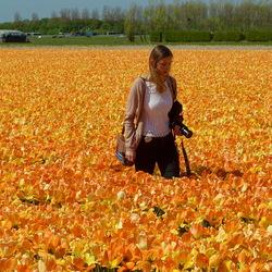 tulpenveld Noordwijkerhout.