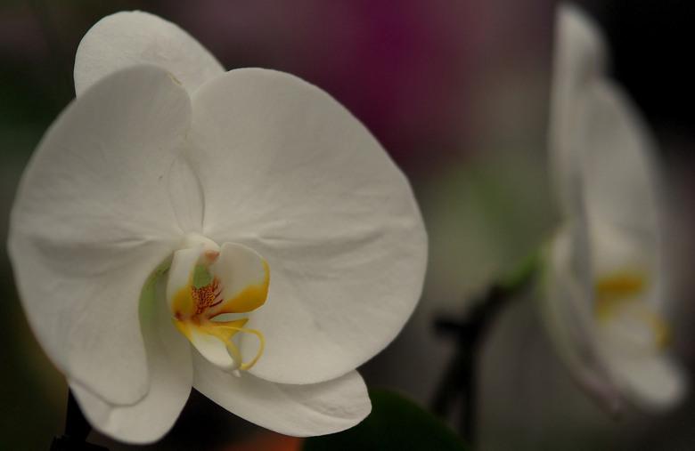 Zacht,.. - Als zijde...de  orchidee een dankbare bloem...<br /> Iedereen bedankt voor de reacties op...<br /> Bij de voordeur,...<br /> Fijne zonda