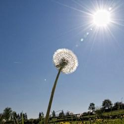 Reach the sun