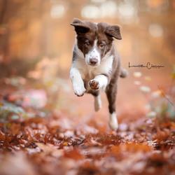 Jumping Trix