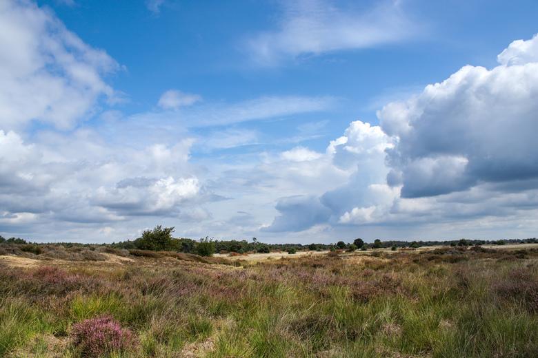 Strabrechtse Heide - Heerlijk om te wandelen de Strabrechtse Heide