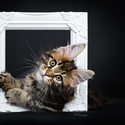 Kiyaras MagNificent - the Art of Kitten