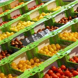 soorten tomaatjes