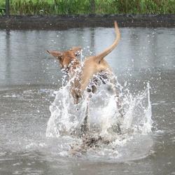 Jira in het water