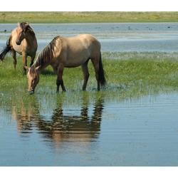 Deux  chevaux (2PK)