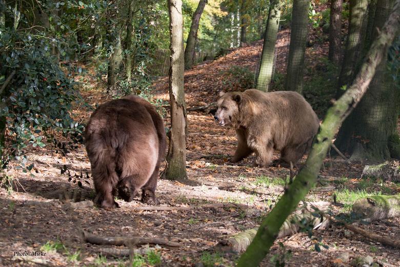 """Zag twee beren  - geen broodjes smeren maar lekker aan de wandel in het bos<br /> <br /> Bedankt voor jullie reacties op de <a href=""""https://zoom.nl"""