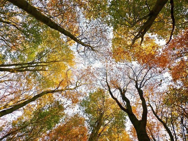 In het herfstbos...... - Vandaag in het bos naar boven gekeken waar de toppen van de bomen bij elkaar komen met prachtig gekleurd blad.....