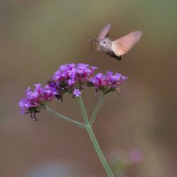 Vreemde vlinder in de bijt
