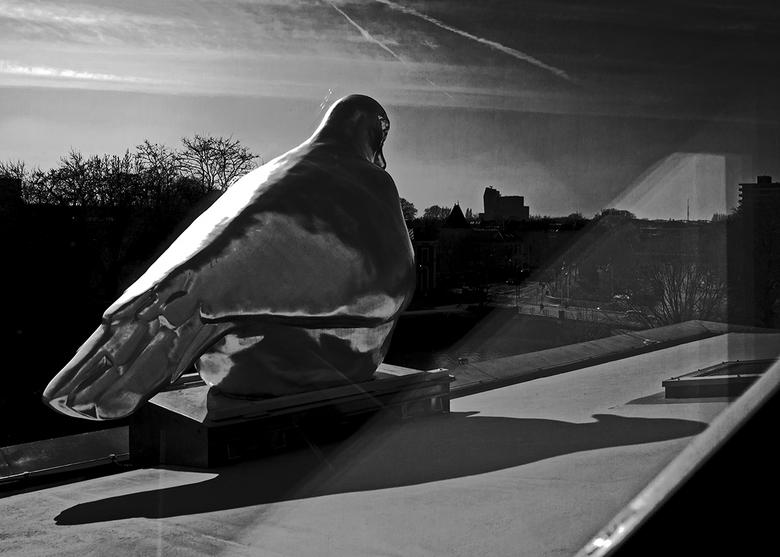 De Fundatie 12 - De duif op het dak