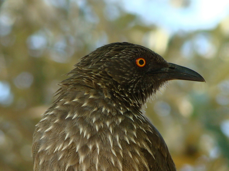 DSC01706.JPG - Vogel in Zuid-Afrika