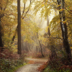 Autumn Dreams.