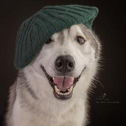 Happy Husky!