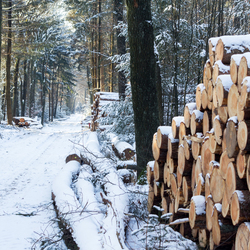 Winter in de bossen.
