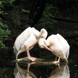 2012-07-28 - Dagje dierentuin - 1760.JPG