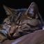 Neelix the Cat