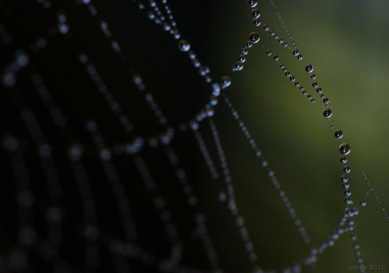 web of water - Spinnenweb met dauw