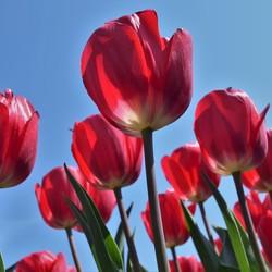 Tulpenroute Noordoostpoler