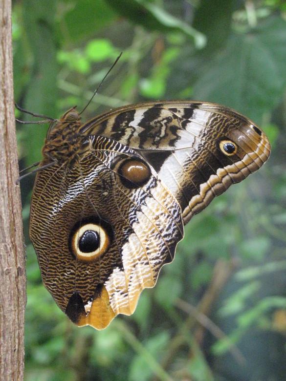 vlindertuin Artis