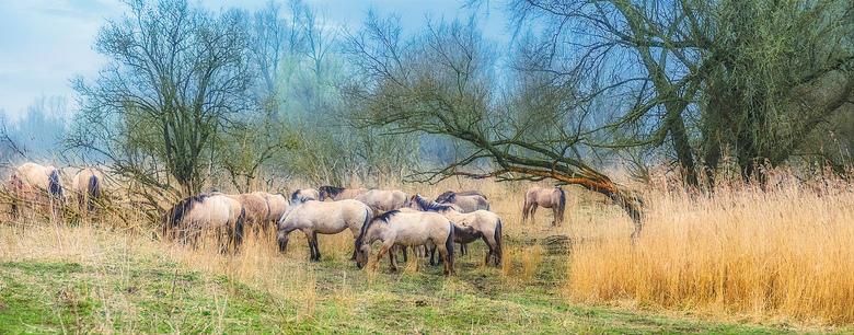 de nieuwe wildernis - paarden in de Oostvaardersplassen