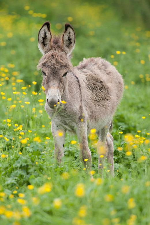 Young Donkey - Young Donkey