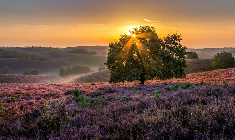 Gouden zonsopkomst - Zonsopkomst afgelopen zondag op het nationale park de Posbank. Pracht van een ochtend. Er had van mij iets meer mist mogen zijn m