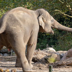 olifant blij dat die geplast heeft