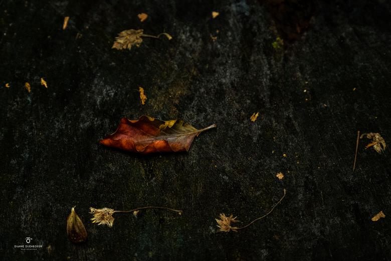 """Stil.... leven - Een waar """"Stil"""" leven in het bos. De ingrediënten zijn allemaal aanwezig. Ik hou van deze warme kleuren tegen de donkere ac"""