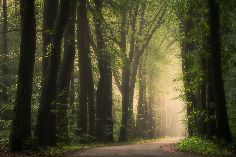 Towards the Light -