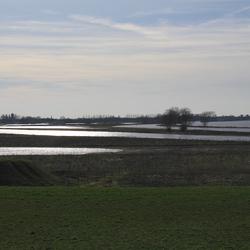 wetland bij oijen