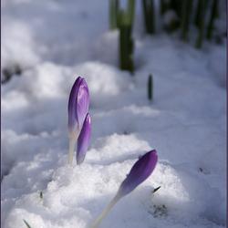 het wordt lente!