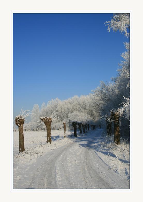 Laan met wilgen - Het is nog steeds kou in Nederland en ik heb nog veel mooie winters foto&#039;s dus ik ga toch maar door met plaatsen. <br /> <br /